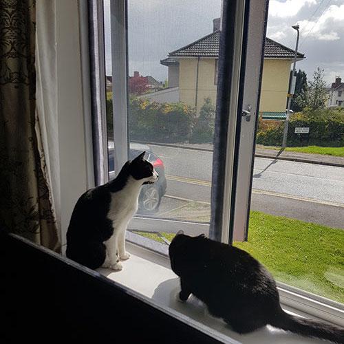 cat proof mesh window screens usa
