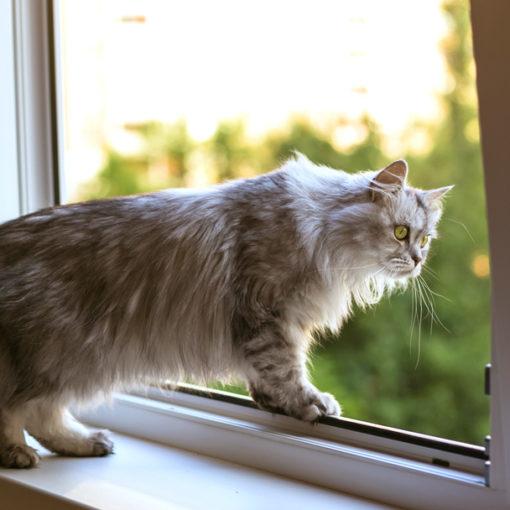 cat window mesh usa
